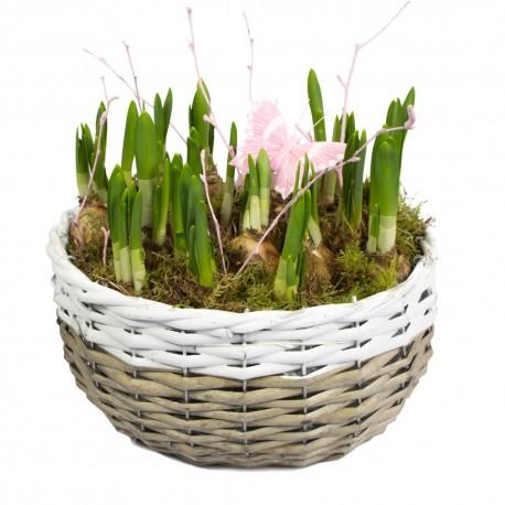 Spring planted basket