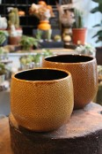 'Mustard' ceramic planter