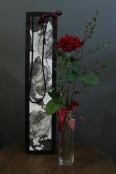 Classic Red Rose