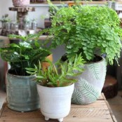 Monthly Plant Subscription