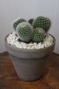 Potted cactus 3